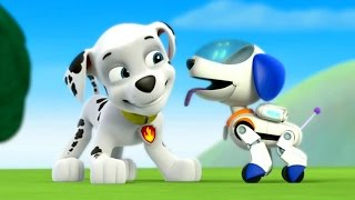 Paw Patrol Academy Game  - Paw Patrol Cartoon Nick JR English  - Paw Patrol full Episodes