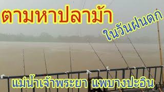ตามล่าปลาม้า แม่น้ำเจ้าพระยา แพบางปะอิน - dooclip.me
