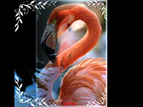 Розовый фламинго-Алёна Свиридова.