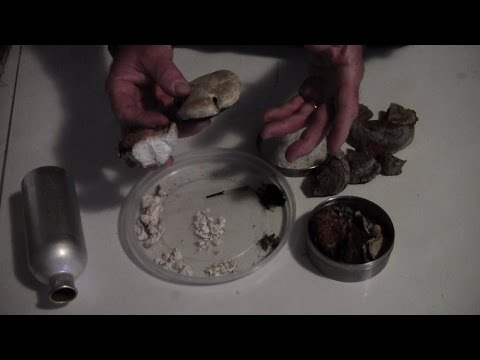 Fungo di unghia mycelium trattamento