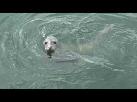 Dutch Wadden Sea (Waddenzee) - UNESCO Wo