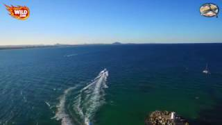 Wild One Whale Watching Small Business Promotion Video