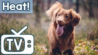 Dog Music TV: for Dogs During Hot Weather! Calm Your Dog in the Summer Heat with this TV and Music!