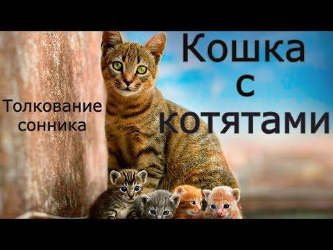 Кошка с котятами - толкование сонника