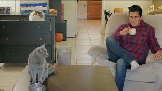 Cheat Meal - Aaron's Animals - Video Youtube