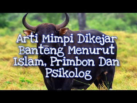 Arti Mimpi Dikejar Banteng Menurut Islam Primbon Dan Psikolog