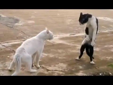 Chết cười với những chú mèo tinh nghịch và dễ thương siêu cấp