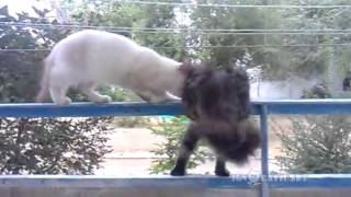 You need to walk / Сходи-ка погуляй! - Video Youtube