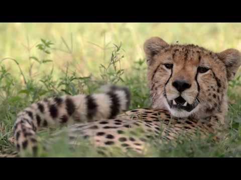 Você conhece as belezas naturais da Tanzânia?