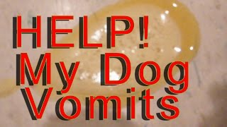 My Dog Vomits - Throws Up - In The Morning help!