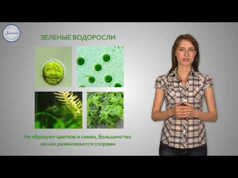Низшие растения - водоросли