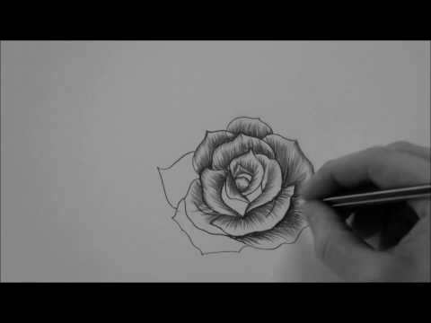 How to draw a Rose In 10 Minutes step by step Real Time