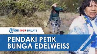 VIRAL Video Pendaki Ditegur saat Tertangkap Basah Petik Bunga Edelweiss: Ada Ancaman Penjara & Denda