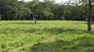 preview picture of video 'Chitwan Nation Park Nepal'