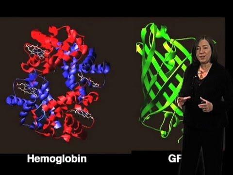 Video Prion Disease - Susan Lindquist (MIT/HHMI)