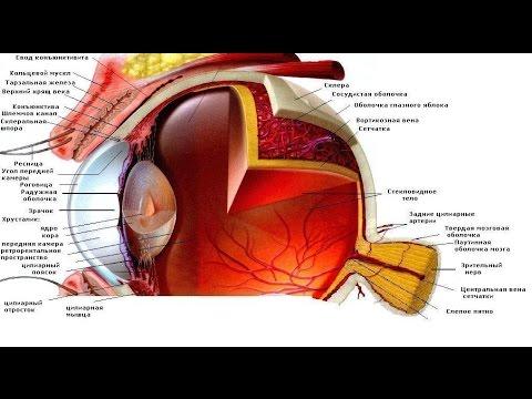 Отзывы о методе жданова по восстановлению зрения