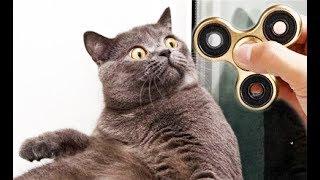 spinner fidget for cats - спиннер  для котов . Приколи 2017