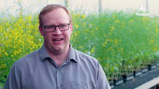 Pioneer - Clubroot Q&A Video