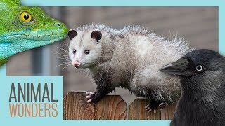 9 Bizarre Animal Adaptations
