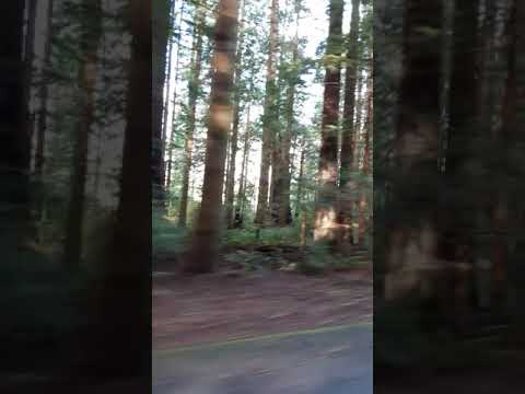 Video Of Van Duzen County Park, CA