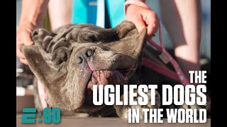 Meet the ugliest dogs in the world | E:60