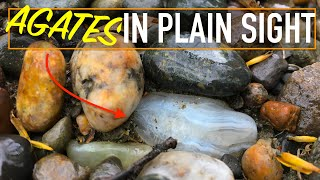 Found STUNNING AGATES On A Flooded River | Montana Rockhounding Petrified Wood,  Agate, And Jasper