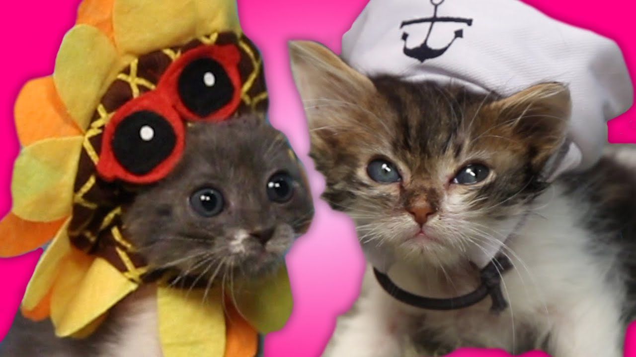 Kittens Try To Wear Tiny Hats thumbnail