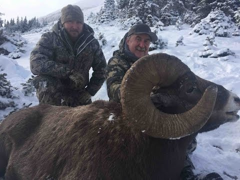Alberta Minister's Tag Rocky Mountain Bighorn 2016 - Breland