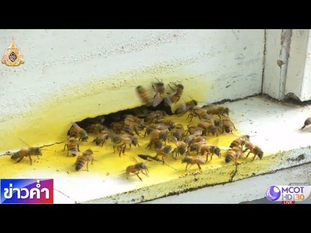 ชัวร์ก่อนแชร์ : 6 วิธีไล่ผึ้งออกจากบ้านด้วยวิธีธรรมชาติ ใช้ได้จริงหรือ?