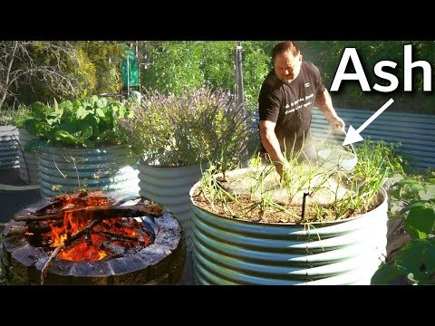 What Happens When You Use Ash in the Garden?