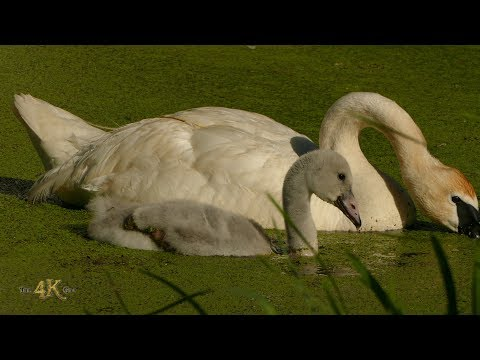 Canada: One hour bird and wildlife footage in 4K - June week 4