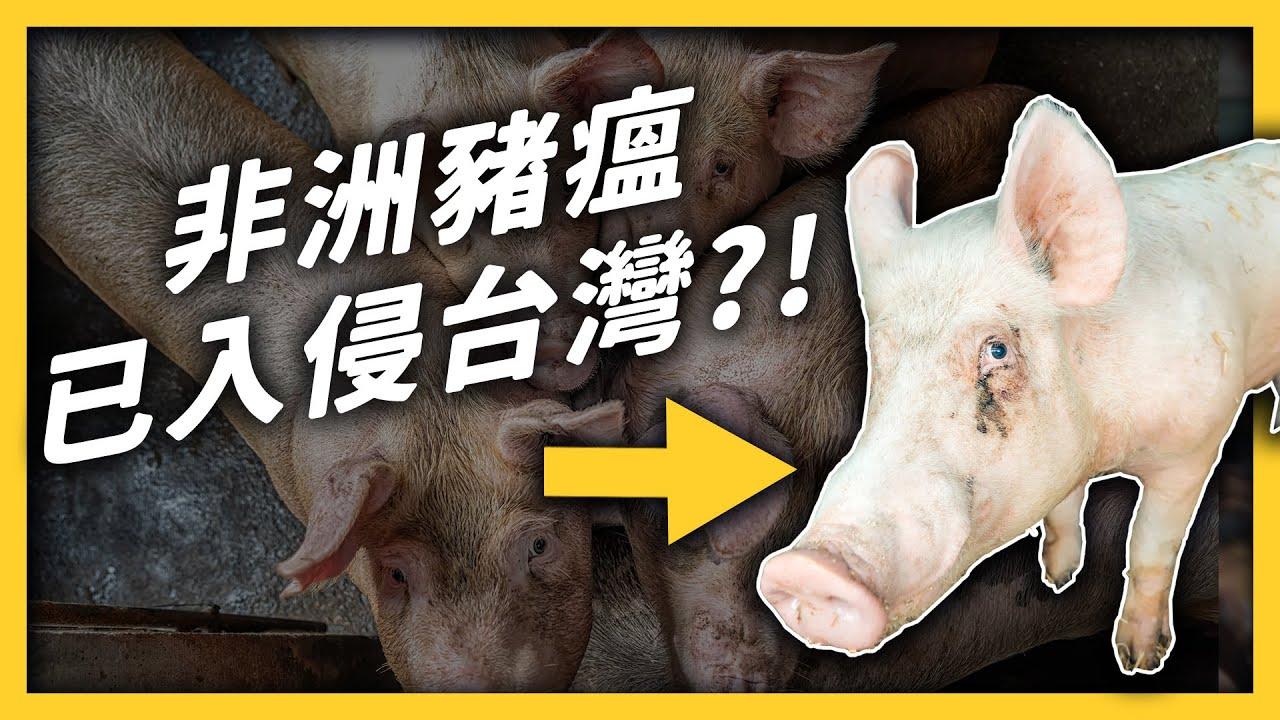 非洲豬瘟肉品走私入台!國際疫情究竟有多嚴重?|志祺七七