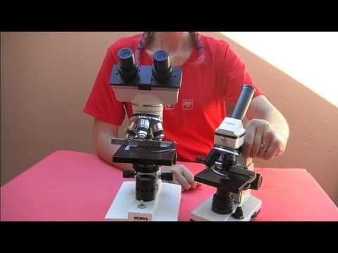 Il primo microscopio