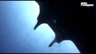 Nuestros Mares - Manta gigante