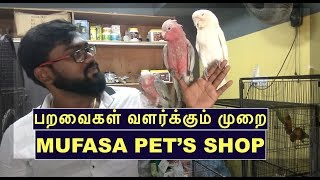 Worlds Most Beautiful Exotic Birds - Mufasa Pets Shop Chennai-spotlight Tamil