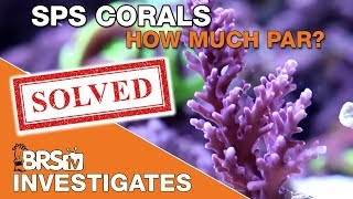 BRStv Investigates: Setting a baseline for SPS corals and future lighting tests