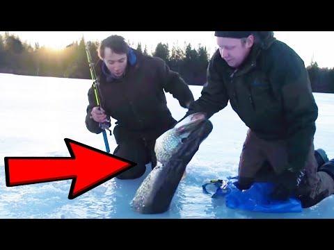 Isfiskeri efter gedder i Sverige