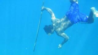 Enlarged Spleen Key to Diving Endurance of