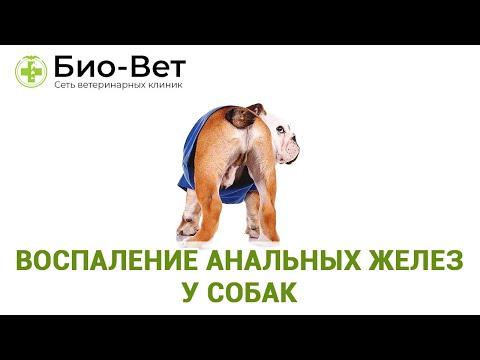 Воспаление Анальных Желез у Собак // Симптомы и Лечение // Сеть Ветклиник БИО-ВЕТ
