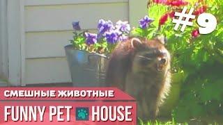 СМЕШНЫЕ ЖИВОТНЫЕ И ПИТОМЦЫ #9 СЕНТЯБРЬ 2018 [Funny Pet House] Смешные животные