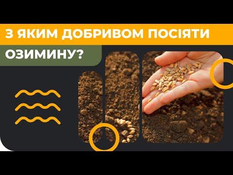С каким удобрением посеять озимые?
