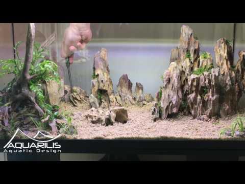 Aquarium Aquascaping : Dragon Scape