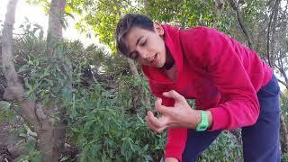 Encontramos Una Escolopendra Y Casi Nos Pica!!! [Buscando Bichos En El Monte]