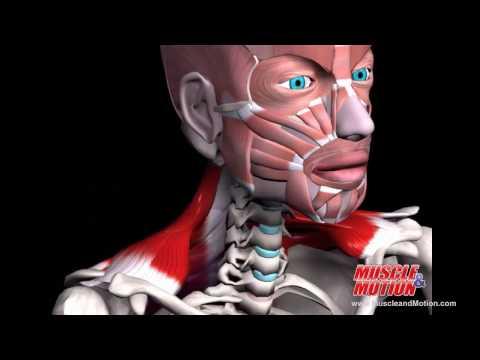 Perché il mal di schiena nella parte bassa della schiena durante il sonno