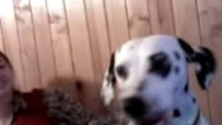 Далматины, Далматинец Брюс поёт___ The dalmatian Bruse singing