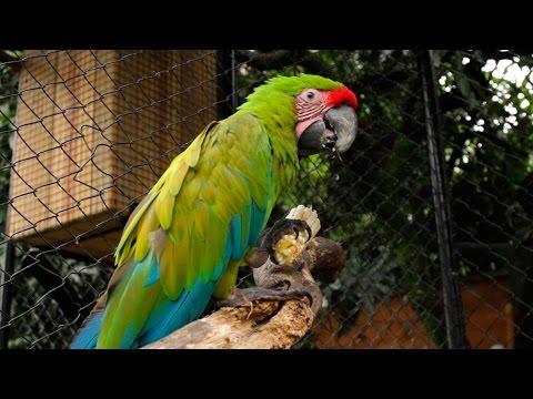 Tráfico y Control de Fauna Silvestre Parte I - TvAgro por Juan Gonzalo Angel