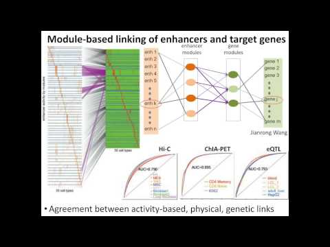 Thumbnail for Epigenomics of common, rare, and somatic variants underlying disease and cancer