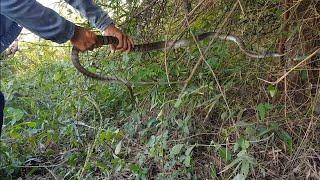 Thanh Niên Say Sỉn Đi Thăm Bẫy Rắn Và Cái Kết 😂🤣  Snake Trap