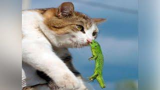 коты видео смешные | Я РЖАЛ ПОЛ ЧАСА / СМЕШНЫЕ ЖИВОТНЫЕ , КОТЫ СОБАКИ И ДРУГИЕ