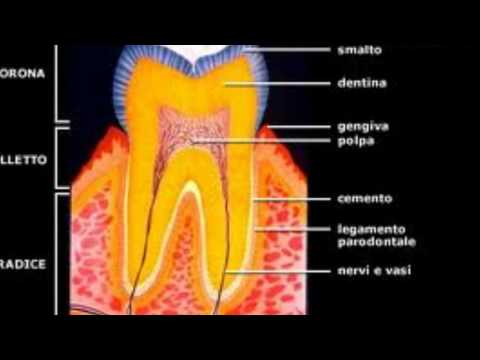 Flebo di osteocondrosi